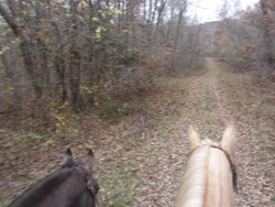 Cabool,MO   Trail riding