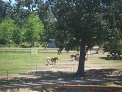 Pasture May 2010