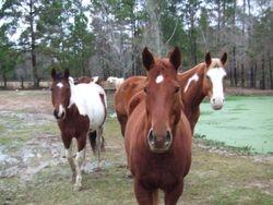 Meet the herd