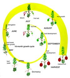 16 Month Cranberry Growing Schedule
