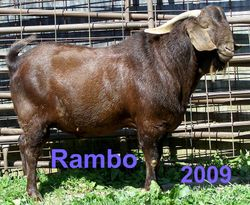 Rambo past away in early 2012 7 yrs old