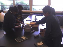 Passenger Boat Lab Activity - 4th Period