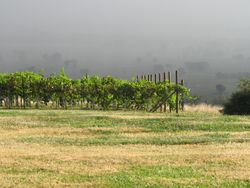 Storm comes to the vineyard