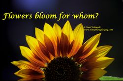 Flowers bloom for whom?