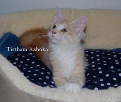 Tirtham Ashoka