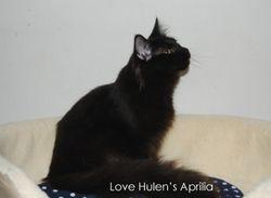 Lovehulens Aprilia