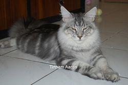 Tirtham Aaron