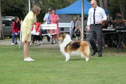 Lydia at the Collie Club of Qld show 2013