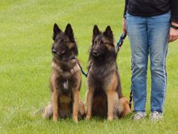 Maizie (left) and Reyna (right)