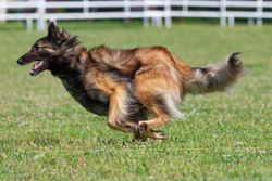 Coursing Ability Summer 2019