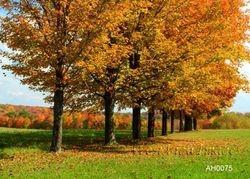 Autumn in a Row