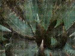 Aloe 01