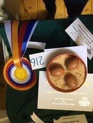 Best Eggs & Best Plate Bantam