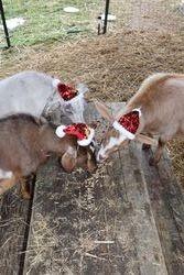 Snacks on Christmas Day