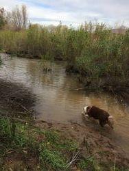K9 Snap Searching water way