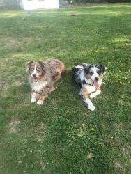 Bentley & Bailey