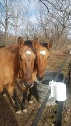 Lucky on left with his full sister Sage