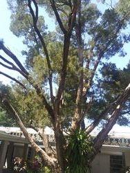 Palm Sunday Greenery