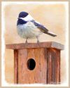 Black-Capped Chickadee on Birdhouse