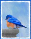 Bluebird on Birdbath  Art