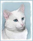 White Cat Blue Eyes Art