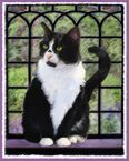 Tuxedo Black and White Cat Art