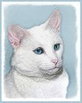 White Cat with Blue Eyes Art
