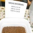 Discount Feeder Prices Pgh Reptile Show