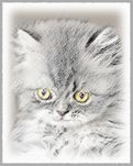 Gray Kitten Art