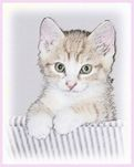 Yellow Tabby Kitten Art