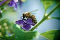 flowers and bees, Love