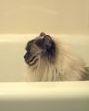 Feline grooming