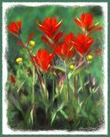 Indian Paintbrush Art