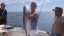 another kingfish for the day