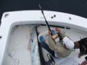 hooked up on marlin