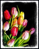 Tulips Bouquet  Art