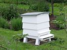 Garden Hives are always Fun!