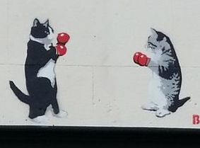 boxing cats spray paint mural street art graffiti kittens fight funny humour