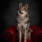 Lola Wolfdog at honiahaka