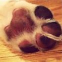 We've Got a 'Paws up' from this pooch!