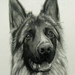 German Shepherd Drawing, Pet Drawing