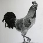 Rooster Drawing, Pet Drawing, Wild Life Drawing