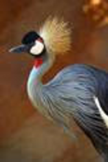 Bird photo from newsletter