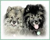 Keeshond Portrait - Mom and Son
