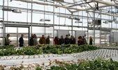 FarmTek Greenhouse Tours, Dyersville, IA