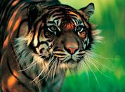 Palm Oil Free Certification Trademark Programme (POFCAP)