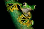 palm oil free frog rainforest