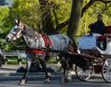 Nothing like a relaxing carriage ride.