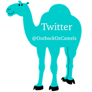 Outback Australian Camels Twitter