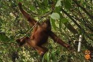 palm oil free assement